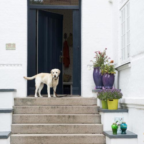 hund trappa krukor odense hemma hos charlotte