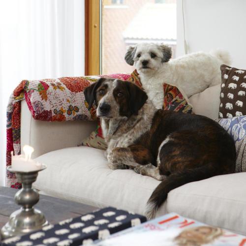 hundar i soffa elefantmönster kuddar