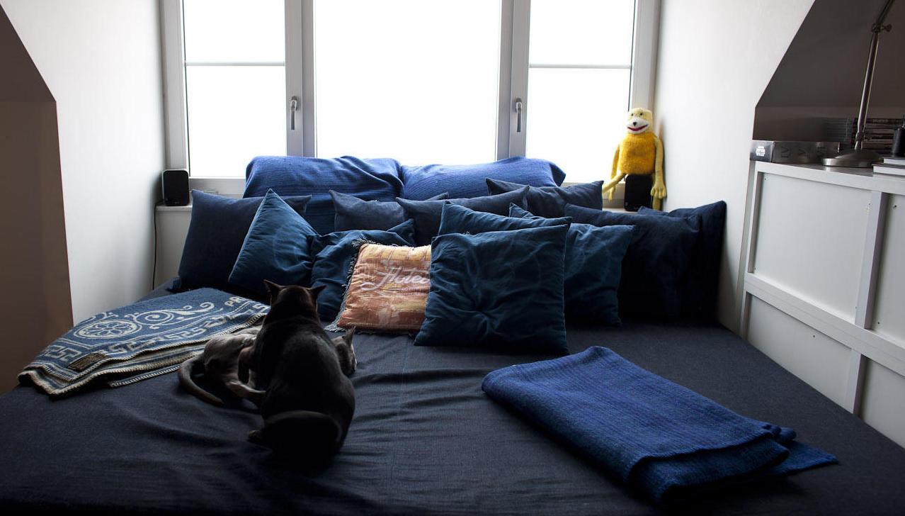 blåa kuddar säng katter